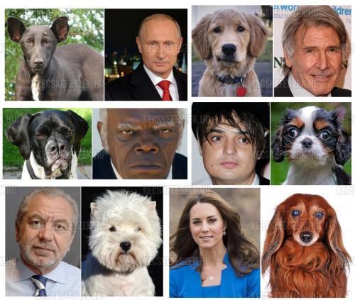 Állatok és celebek