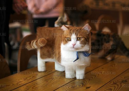 Pixel macska
